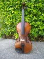 Arco Viola from 15 to 16.5 inches with Free Shipping