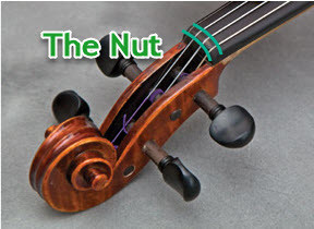 nut of a string instrument